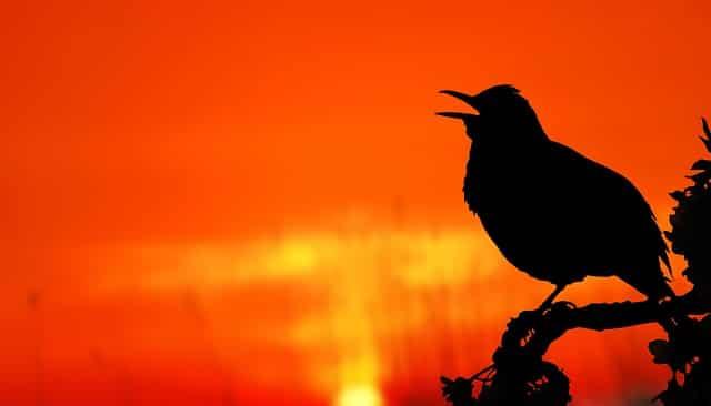 ツイッターのイメージで鳥のシルエット