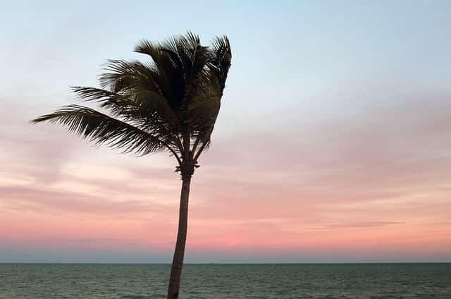 逆風のイメージでヤシの木が風になびいてる